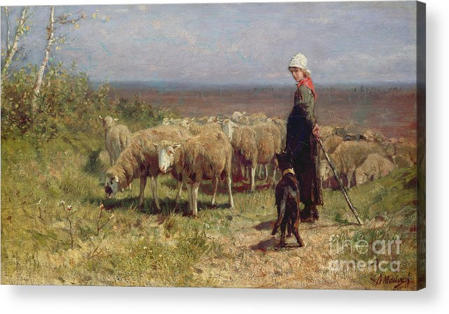 Shepherdess Acrylic Print featuring the painting Shepherdess by Anton Mauve