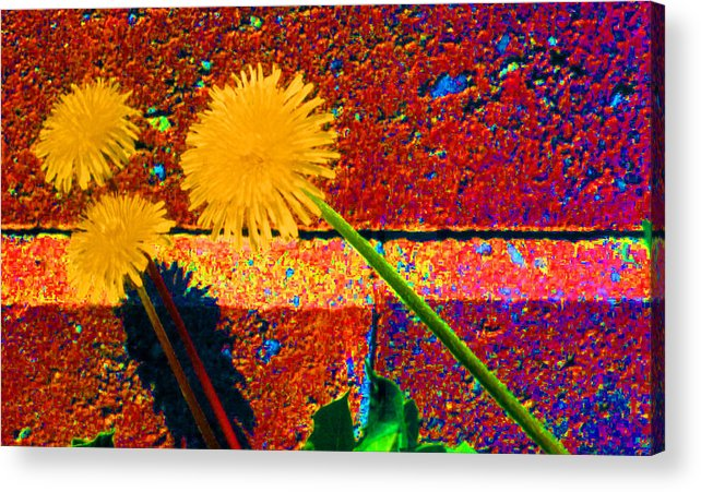 Dandylion Acrylic Print featuring the photograph Toward Light 35 by Lyle Crump