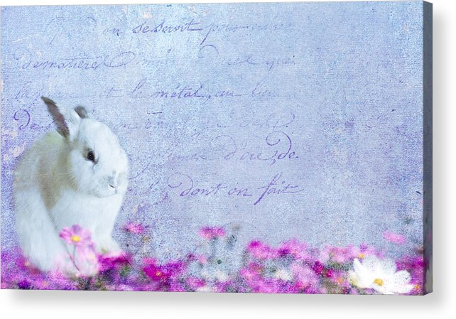 Bunny Acrylic Print featuring the photograph Waiting For Eggs by Rebecca Cozart