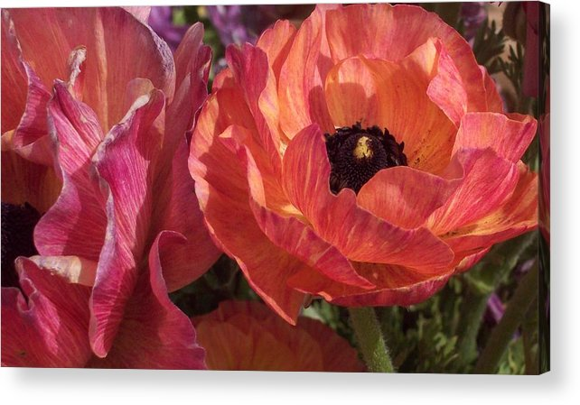 Floral Acrylic Print featuring the photograph Warm Flower Friends by Jean Booth