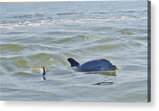 Dolphin Acrylic Print featuring the photograph Dolphins by William Morgan