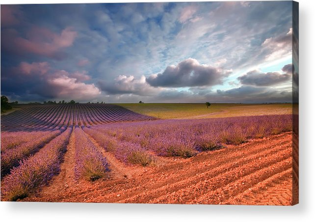 Outdoors Acrylic Print featuring the photograph Valensole France by Eric Rousset