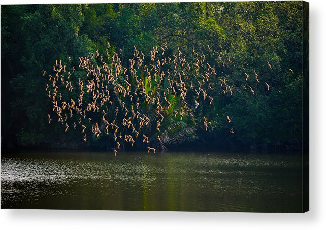 Birds Acrylic Print featuring the photograph Birds In Flight by Chua ChinLeng