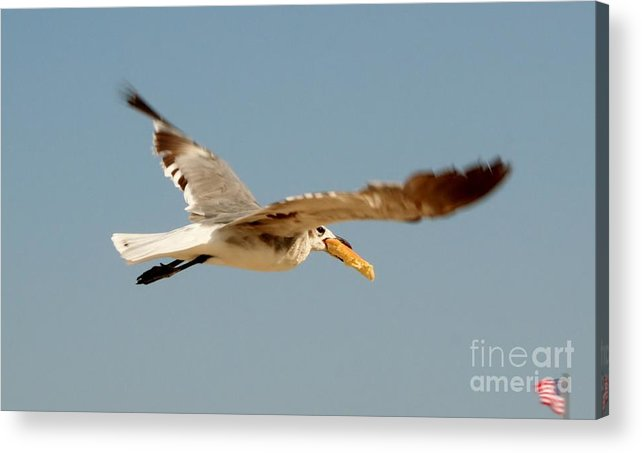 Seagull Acrylic Print featuring the photograph Hungry Seagull by Lori Work