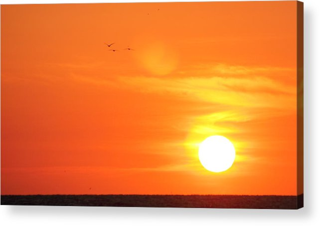 Sunrise Acrylic Print featuring the photograph Morning Flight by Andrew Montgomery