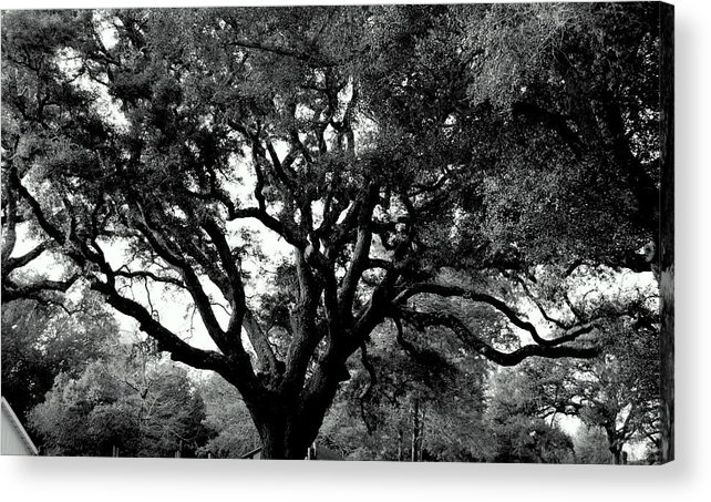 Acrylic Print featuring the photograph Pensacola Lighthouse Tree by Christy Phillips