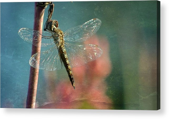 Dragonfly Acrylic Print featuring the photograph Tranquil by Fraida Gutovich