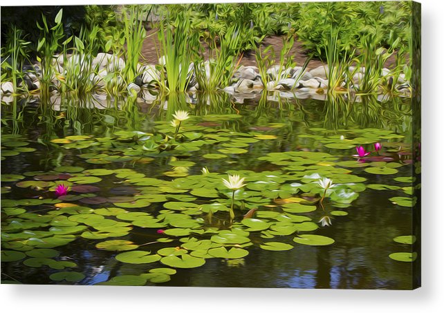 Water Lily Acrylic Print featuring the photograph Water Lily Garden 2 by Michel DesRoches