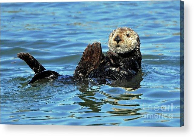 Susan Wiedmann Acrylic Print featuring the photograph Sea Otter Primping by Susan Wiedmann