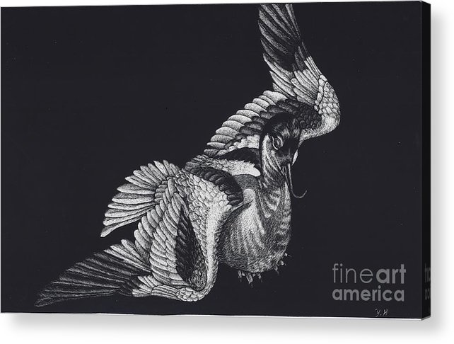 Avocet Acrylic Print featuring the drawing Avocet by Yenni Harrison