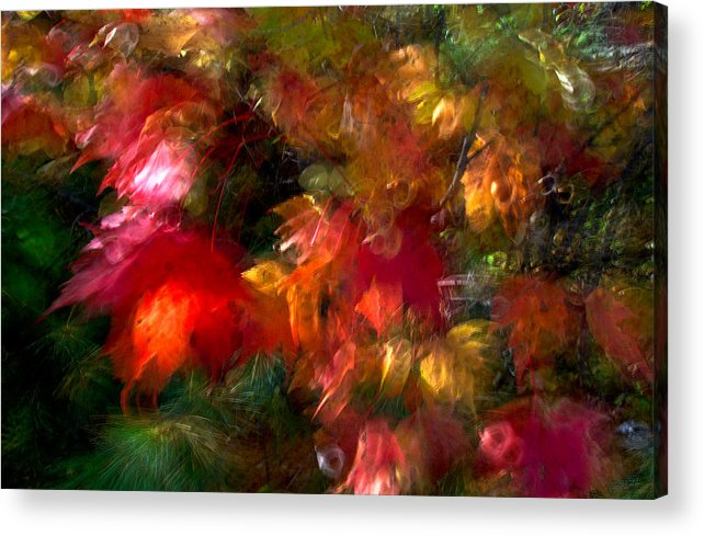 Canada Acrylic Print featuring the photograph Flury by Doug Gibbons
