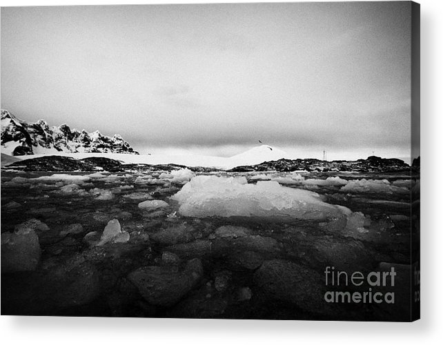 Brash Acrylic Print featuring the photograph brash sea ice forming winter closing in port lockroy Antarctica by Joe Fox