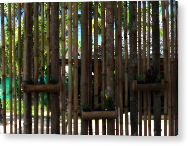 Bamboo Acrylic Print featuring the photograph Bamboo View by Georgia Fowler