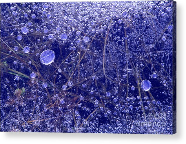 North America Acrylic Print featuring the photograph Frozen Bubbles In The Merced River Yellowstone Natioinal Park by Dave Welling