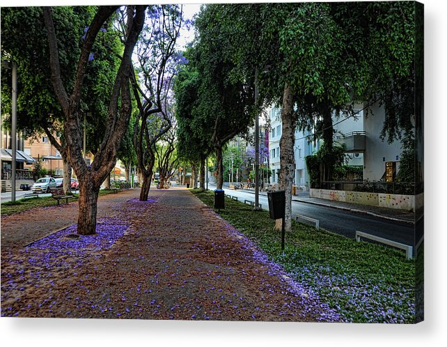 Foliage Acrylic Print featuring the photograph Rothschild Boulevard by Ron Shoshani