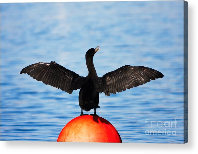 Double-crested Cormorant Acrylic Print featuring the photograph Cormorant by Michael McStamp