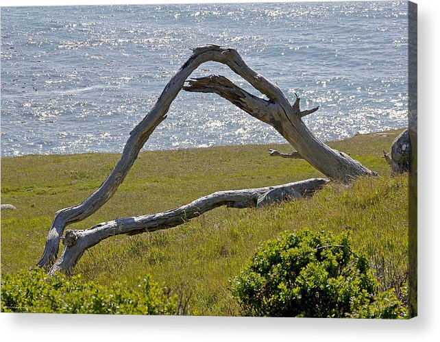 Highway 1 Acrylic Print featuring the photograph Bleached Wood And Diamond Waves by Mick Anderson