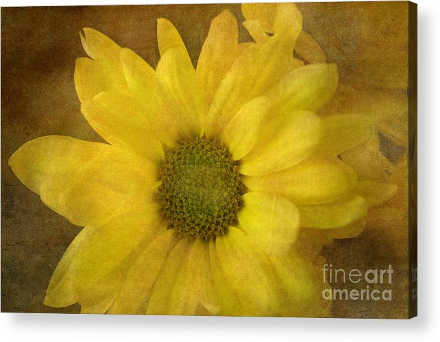 Mum Acrylic Print featuring the photograph Yellow Mums by Benanne Stiens