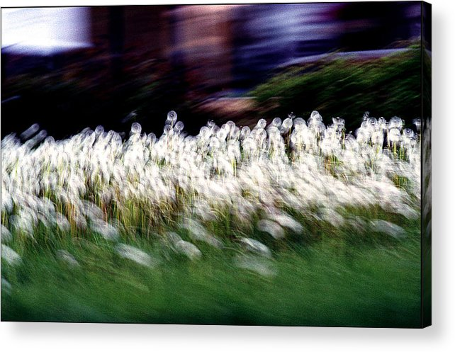 Summer Acrylic Print featuring the photograph Revival by Robert Shahbazi