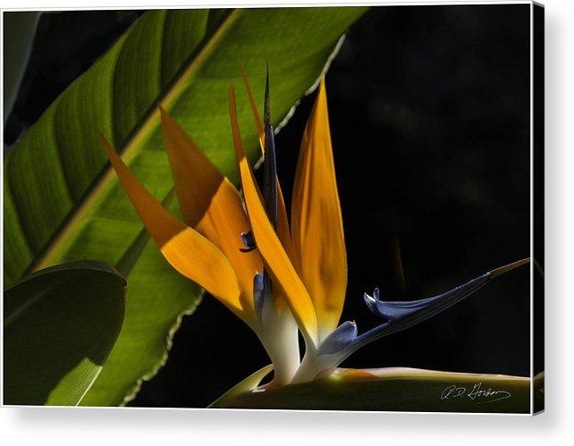 Flower Acrylic Print featuring the photograph Bird Of Paridise2 by Richard Gordon