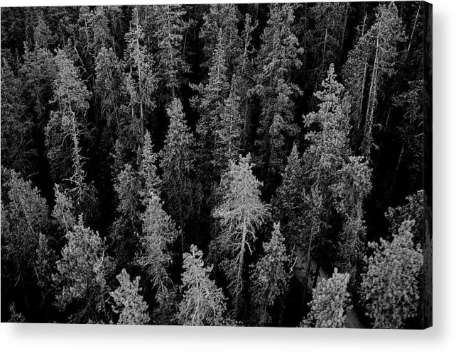 Forest Acrylic Print featuring the photograph Dark Forest by Caroline Clark