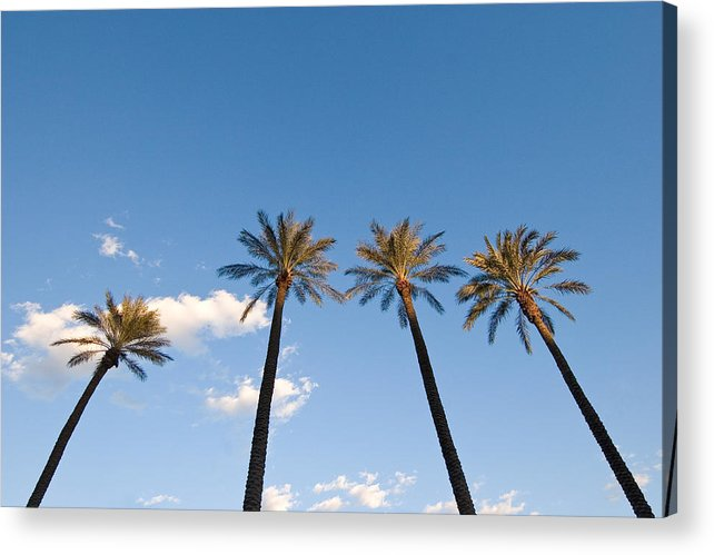 Palm Trees Acrylic Print featuring the photograph Four Palm Trees by Rich Iwasaki