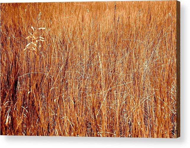 Field Acrylic Print featuring the photograph Golden Field by Caroline Clark