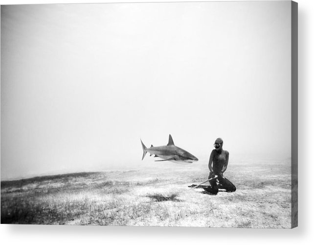 Freediving Acrylic Print featuring the photograph If Sharks Could Fly by One ocean One breath