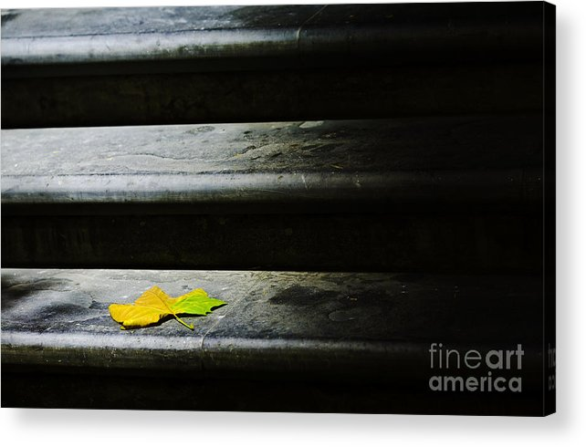 Maple Leaf Acrylic Print featuring the photograph Maple Leaf On Step by Sheila Smart Fine Art Photography