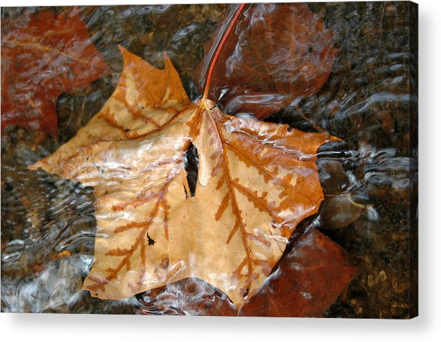 Autumn Acrylic Print featuring the photograph Tributaries by Deborah Gallaway
