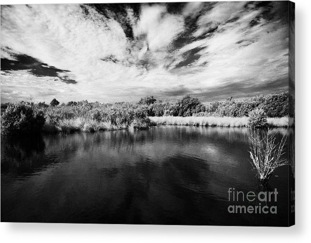 Florida Acrylic Print featuring the photograph Flooded Grasslands And Mangrove Forest In The Florida Everglades Usa by Joe Fox