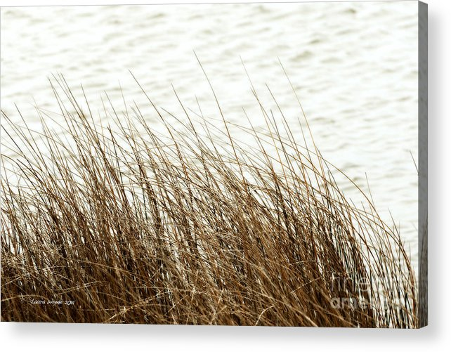 Shore Of Virginia Beach Acrylic Print featuring the photograph Grass Down By The Shore Of Virginia Beach by Artist and Photographer Laura Wrede