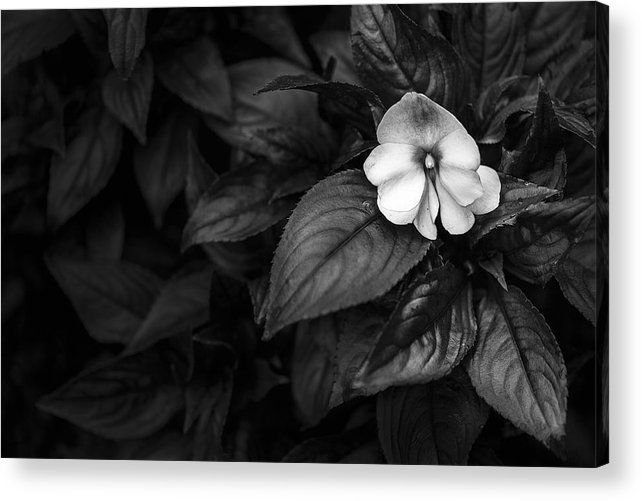 Horizontal Acrylic Print featuring the photograph Lonely 1 by Jon Glaser