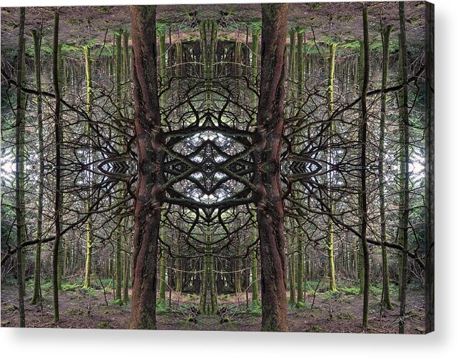 Nature Acrylic Print featuring the photograph Roan Fantasy by Ed Kelley