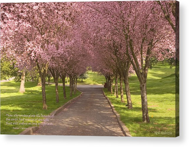 Blooms Acrylic Print featuring the photograph Blooms Along The Lane by Mick Anderson