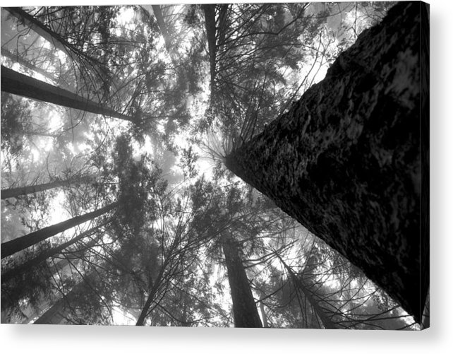 Baden Powell Acrylic Print featuring the photograph Foggy Treetops by Scott Merriman