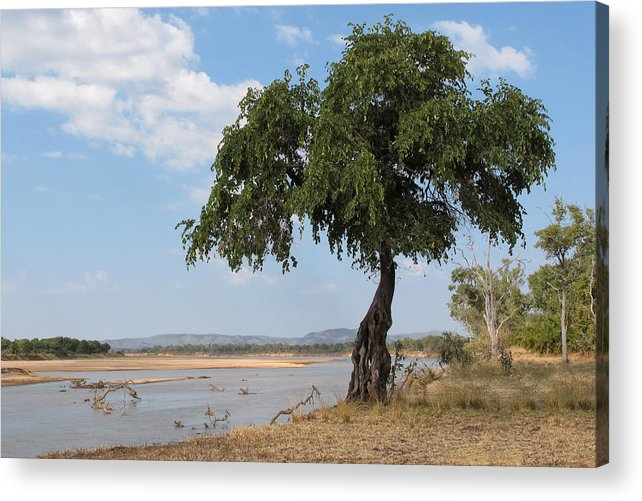 Africa Acrylic Print featuring the photograph Monkey Bread Tree By The River by Scott and Rebecca Rothney