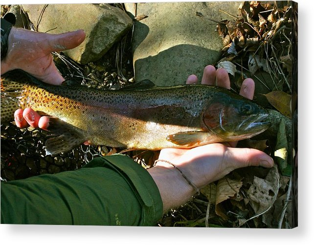 Rainbow Trout Acrylic Print featuring the pyrography Rainbow by Bennie Batson