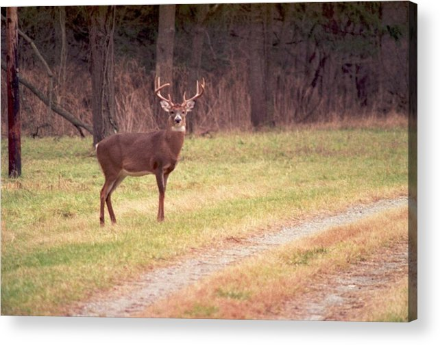 Deer Acrylic Print featuring the photograph 070506-17 by Mike Davis