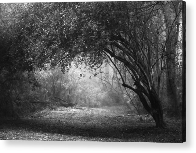 Black Acrylic Print featuring the photograph Untitled by Ayesha Lakes