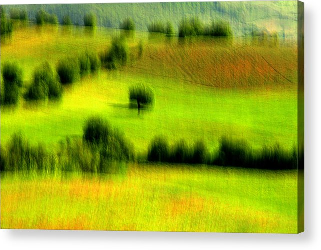 Summer Acrylic Print featuring the photograph All Green by Robert Shahbazi