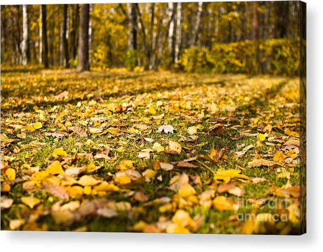 Autumn Acrylic Print featuring the photograph Autumn Carpet by Vadim Grabbe