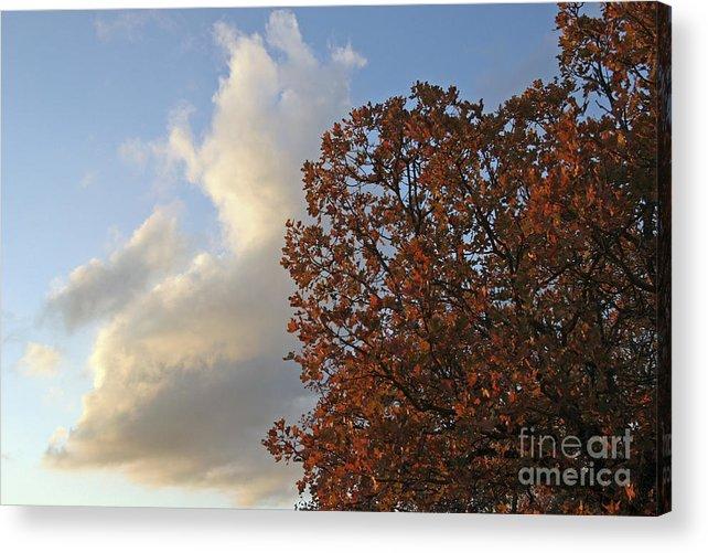 Autumn Acrylic Print featuring the photograph Autumn Sky by Jeannie Burleson