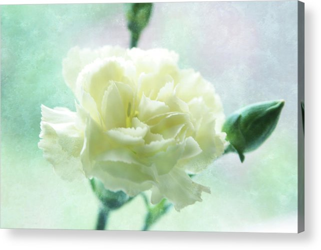 Flower Acrylic Print featuring the photograph Carnation by Toni Hopper