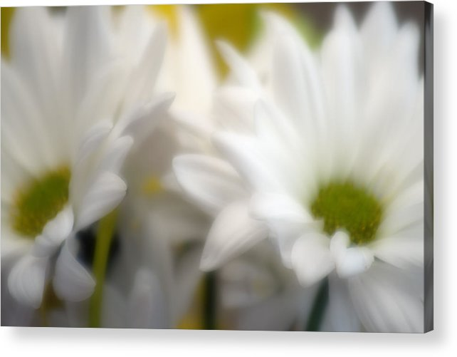 Floral Acrylic Print featuring the photograph Dreamy Daisies by Ayesha Lakes