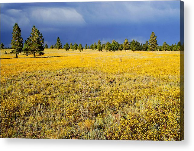 Evening Acrylic Print featuring the photograph Evening Contrast by Barry Shaffer