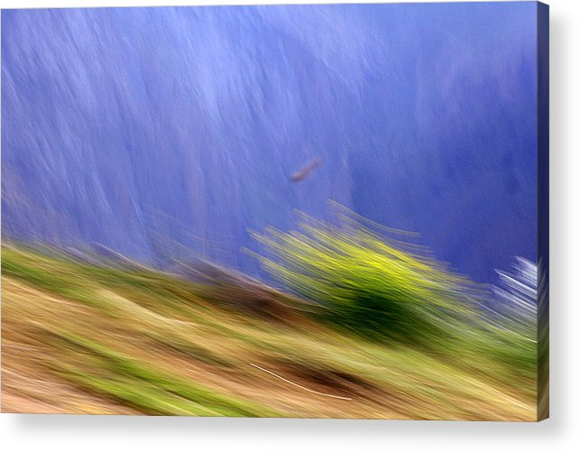Summer Acrylic Print featuring the photograph Imigration by Robert Shahbazi