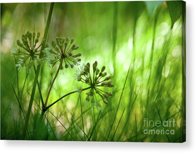 Acadia National Park Acrylic Print featuring the photograph Maine by Susan Cole Kelly