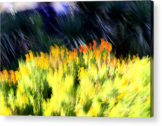 Summer Acrylic Print featuring the photograph Miracle by Robert Shahbazi