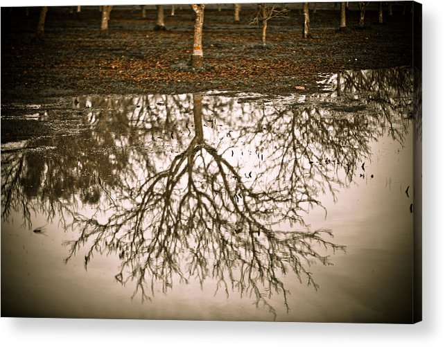 Nature Acrylic Print featuring the photograph Roots by Derek Selander